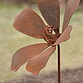 Rusted Iron Flower by Maria Urso
