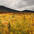 Rustic Autumn At Franconia Notch by Luke Moore