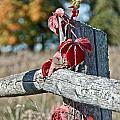 Rustic Autumn by Cheryl Baxter