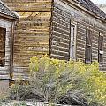 Rustic Building by Wendy Elliott