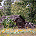 Rustic Cabin In The Mountains by Athena Mckinzie