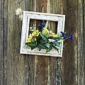 Rustic Door  by John Greim