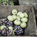 Rustic Fruit by Antony McAulay
