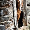 Rustic Horse Scene by Cheryl Baxter
