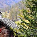 Rustic House And Tree by Mats Silvan