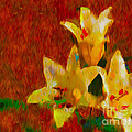 Rustic Lilies by P Donovan