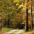 Rustic Road by Susan Herber