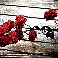 Rustic Rose by Debra Forand