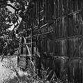 Rustic Shed 6 by Richard J Cassato