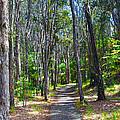 Rustic Trail by John Dauer