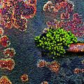 Rusting Still Life by Tim F Hale