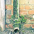 Rusty Drainpipe by Tom Gowanlock