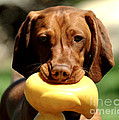 Rusty Has A Duck by Dianne Phelps