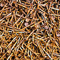 Rusty Nails Abstract Art by James BO Insogna