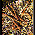 Rusty Nails by Debbie Portwood