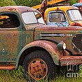 Rusty Old Trucks by Louise Heusinkveld