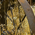 Rusty Old Wheel And Yellow Grasses by Jeff Goulden