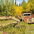 Rusty Truck And Grader Forgotten In Fall Forest by Stephan Pietzko