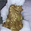 Ryukyuan Shisa Dog With Snow-hawk by Jeff at JSJ Photography