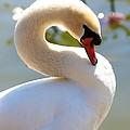 S Is For Swan by Carol Groenen
