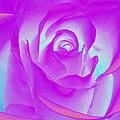 Sabattier Rose by Bill Barber