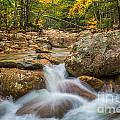 Sabbaday Brook In Autumn by Susan Cole Kelly