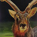 Sable Antelope by Sandra Reeves