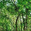 Sacred African Rainforest by Sylvie Bouchard