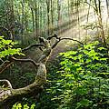 Sacred Grove by Dustin  LeFevre