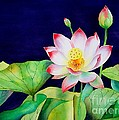 Sacred Lotus by Robert Hooper