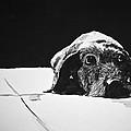 Sad Dog by Carol Blackhurst