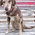 Sad Face Dog On Bleachers by Sylvie Bouchard