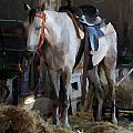 Sad Horse by Doc Braham