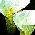 Sad Lillies by Gary Olsen-Hasek
