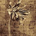 Sad Song In Sepia by Shirley Mangini