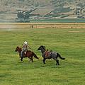 Saddle Training by E Faithe Lester