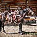 Saddled And Waiting by Sue Smith