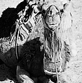 saddled dromedary camel sitting on the sand in the sahara desert at Douz Tunisia by Joe Fox
