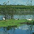 Safe In The Pond by Susan Wyman