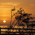 Safety Harbor Sunrise by Cliff Cammarata