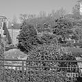 Sagamihara Asamizo Park 16a by Jay Mann