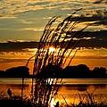 Sage Grass Sunset by Ronald Goode