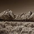 Sagebrush And Tetons by Michael Kirk