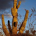 Saguaro 2 by Kerri Mortenson