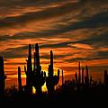 Saguaro Cactus Sunset by Walt Sterneman