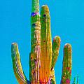 Saguaro Colors by Michelle Dallocchio