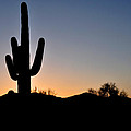 Saguaro Sunset by Diane Lent