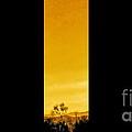 Saguaro Sunset Triptych by Tim Richards
