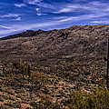 Saguaro View No.1 by Mark Myhaver