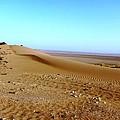 Sahara Desert 14 by Teresa Ruiz